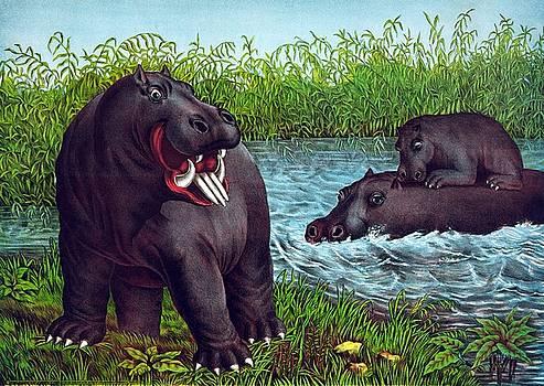 The hippopotamus, 1874 by Vintage Printery