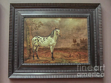 The horse by Paulus Potter by Paulus Potter