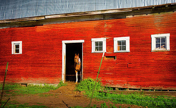 The horse in Palouse by Matt Shiffler