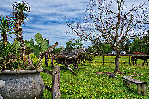 The Horse Ranch by TJ Baccari