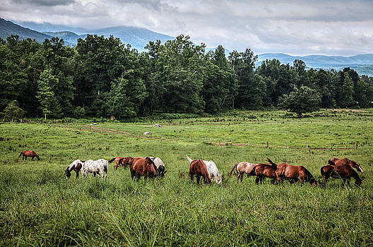 The Horses of Cades Cove by Dave Ross