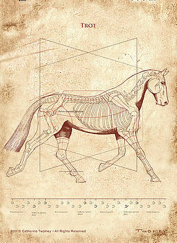 The Horse's Trot Revealed by Catherine Twomey