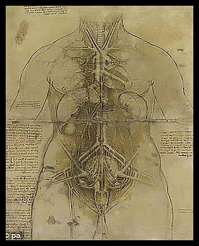 The Human Organ System by James Christopher Hill
