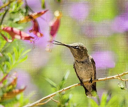 Saija Lehtonen - The Hummingbird Whisper