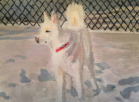 The Husky by Danielle Allard