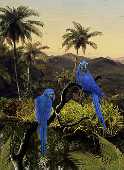 The Hyacinth Macaws of the Tropics by Matthew Schwartz