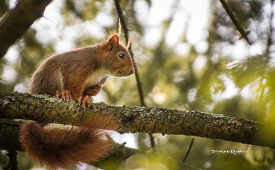The Hypnotized squirrel by Stwayne Keubrick