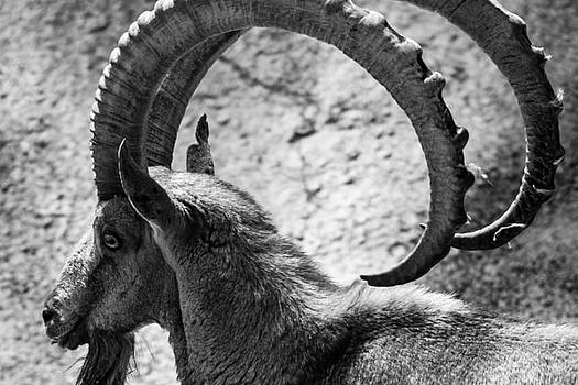 The Ibex by Peak Photography by Clint Easley