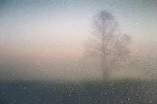 Joel Witmeyer - The Ice Tree