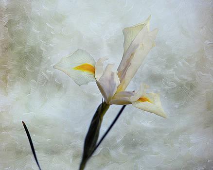 The Iris by Mary Lee Dereske