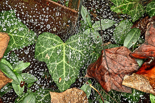 Mother Nature - The Ivy, The Web, and The Rain