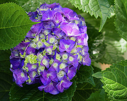 The Joy of Purple by Kathy Clark