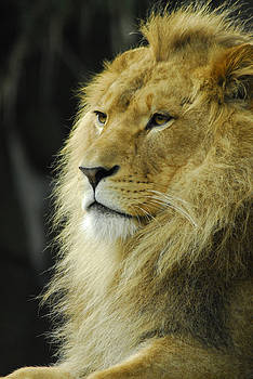The King by Al Junco