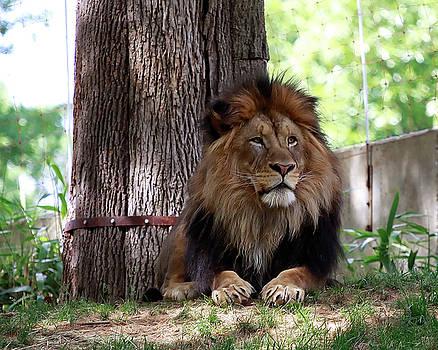The King by Joe Paniccia