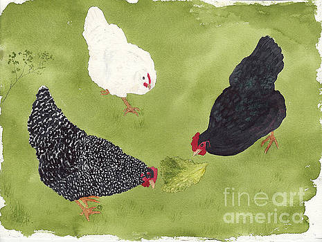 The Ladies Love Salad Three Hens With Lettuce by Conni Schaftenaar