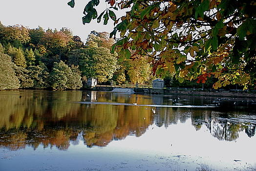 Doug Thwaites - The Lake at Studley Royal