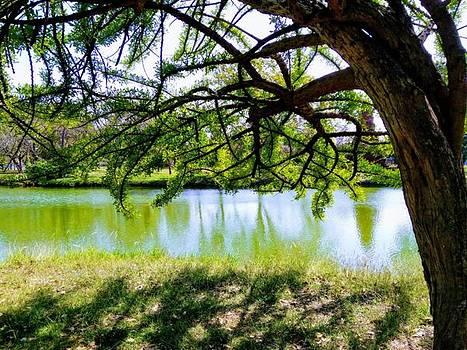 The lake by Chatzie Loetsupan