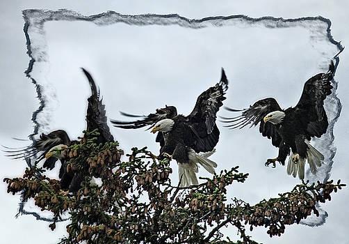 The Landing by Tiana McVay
