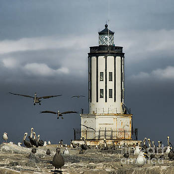 The Landing Zone by Nick Carlson