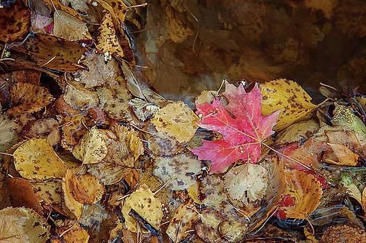 The Last Leaf by Ramona Murdock