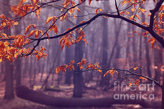 LHJB Photography - The last leaves...
