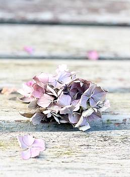 The last of the Hydrangea by Emma Manners