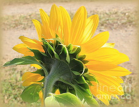 The Last Sunflower of Summer by Dora Sofia Caputo Photographic Design and Fine Art