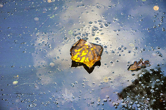 The leaf and Liquid Sky by Allen Carroll