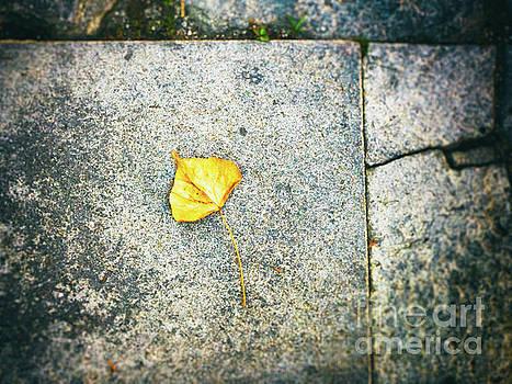 The leaf by Silvia Ganora