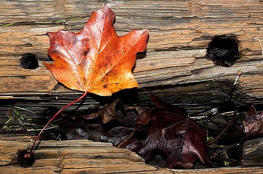 Barbara  White - The Leaves Fall