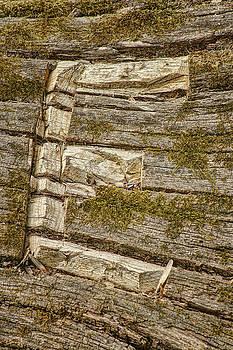 Nikolyn McDonald - The Letter E - Wood