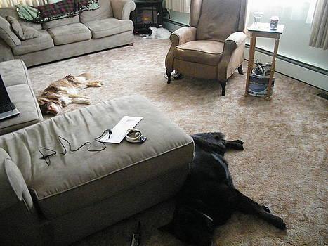 The Life of a dog. by Paula Giampola