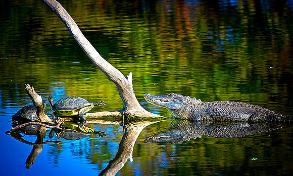 The Life of a Gator by Mark Andrew Thomas
