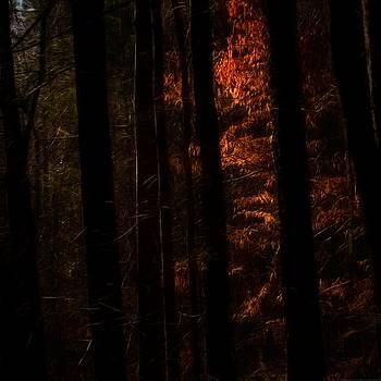 The Light Between by Chrystyne Novack