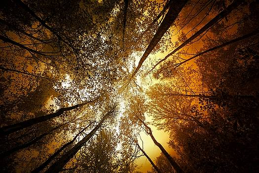 The Light From Above by Scott Fracasso
