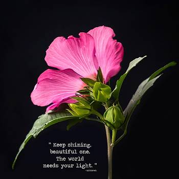 Terry DeLuco - The Light Rose Of Sharon Quote 2017 Square