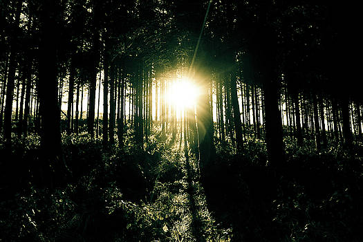 The Light through the Forest by Richard Marks