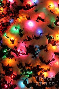 Wayne Moran - The Lights of Christmas
