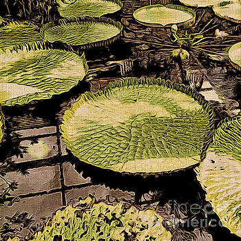 Onedayoneimage Photography - The Lily Pads