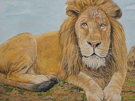 The lion by Rajesh Chopra