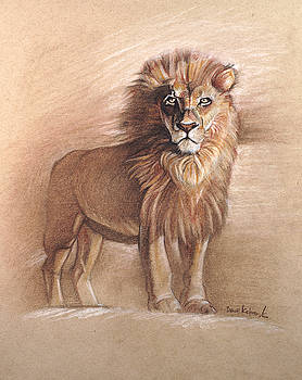 The Lion - Wildlife Drawing by Dave Kobrenski