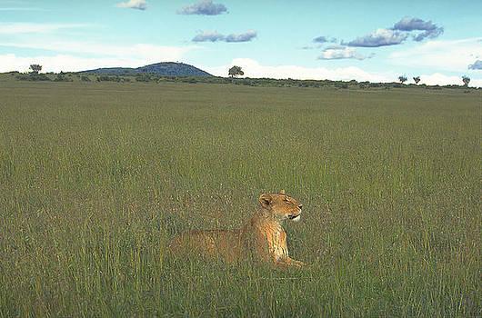 The Lioness by Siddarth Rai