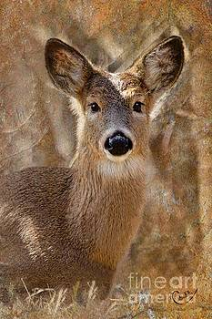 The Little Doe by Laurinda Bowling