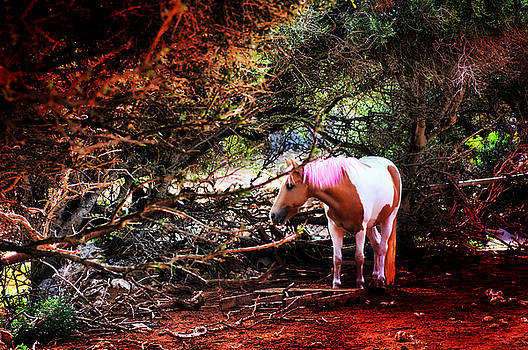 Pedro Cardona Llambias - The little pink unicorn by pedro cardona