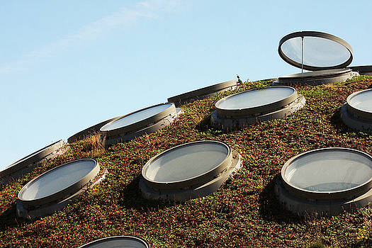 Art Block Collections - The Living Roof