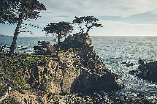 Margaret Pitcher - The Lone Cypress No.2