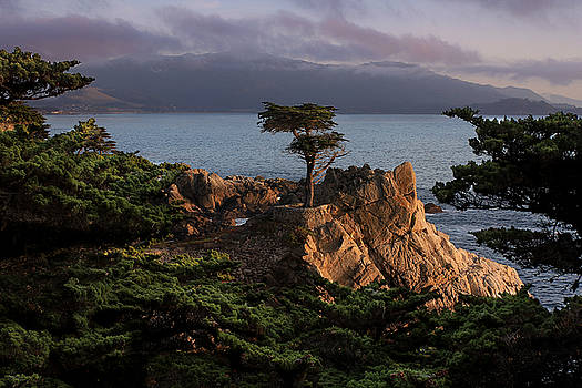 The Lone Cypress of Pebble Beach by Dave Sribnik