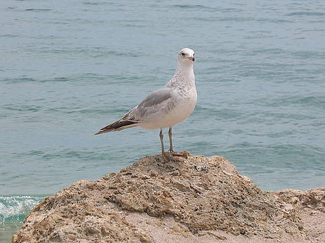 The Lone Seagull  by Tony Payne