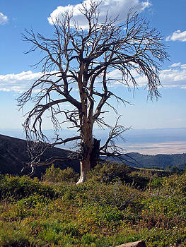 The Lone Tree by Juls Adams
