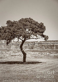 The Lone Tree by Todd Blanchard